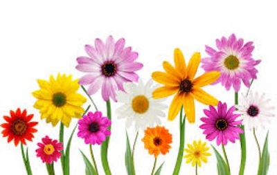 Free clipart. Clip art may flowers
