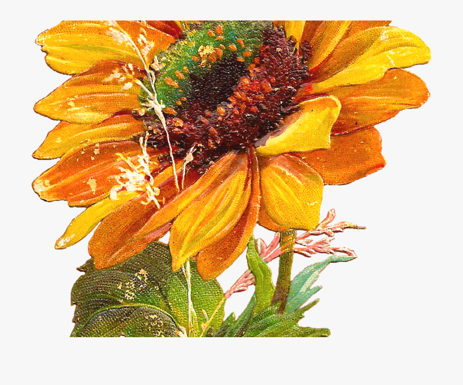 Clipart 94 graphic library stock 94 Fall Sunflowers Clipart Marvelous Printable Pictures - Vintage ... graphic library stock