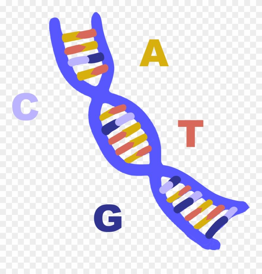 Clipart abbreviation jpg free Abbreviation Of Deoxyribonucleic Acid, A Long Molecule - Dna Clipart ... jpg free
