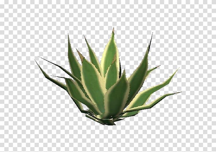 Clipart aloe vera graphic black and white download Aloe vera Succulent plant Centuryplant Aloe arborescens Aloe striata ... graphic black and white download