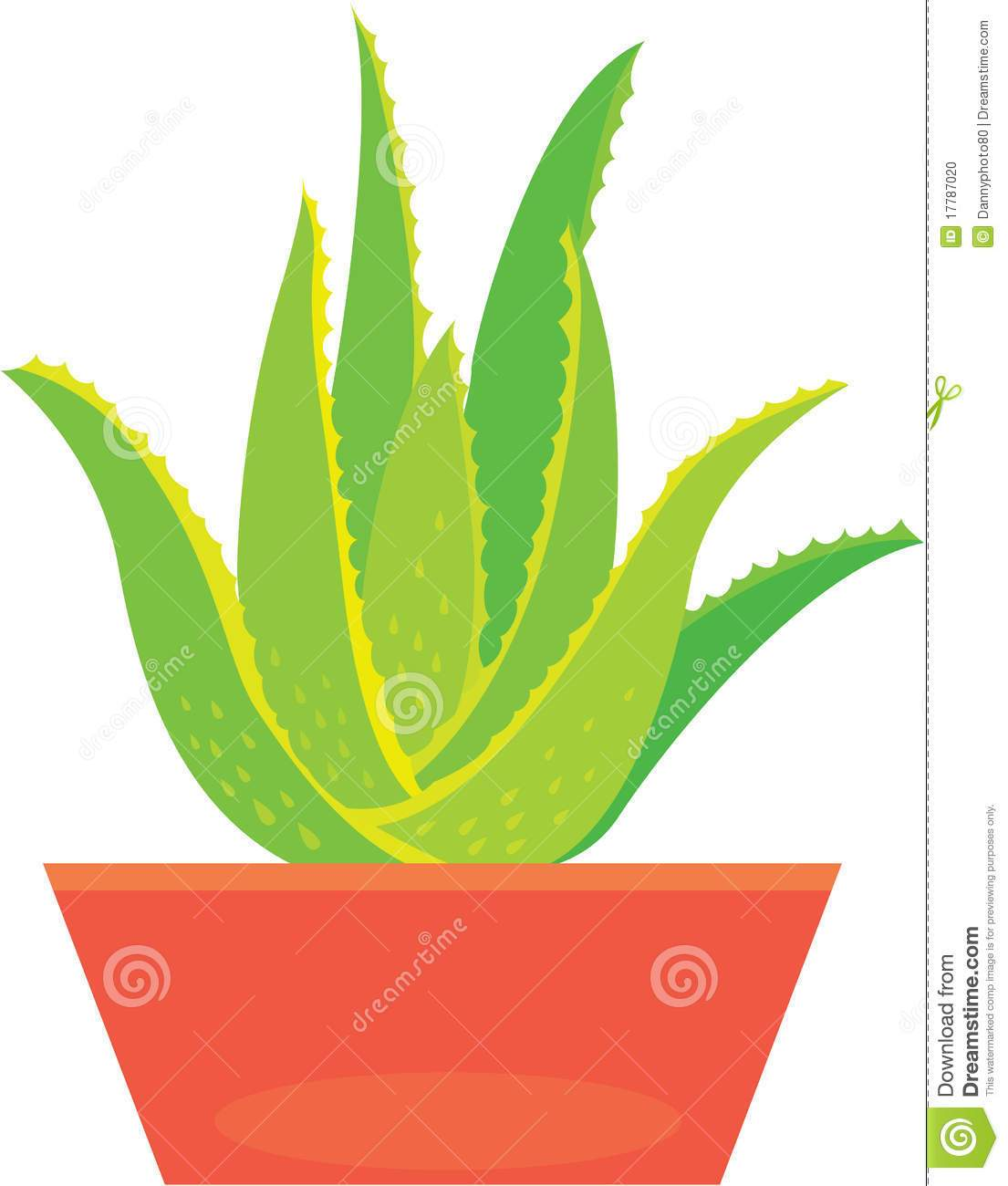 Clipart aloe vera png royalty free library Aloe vera plant clipart 3 » Clipart Portal png royalty free library