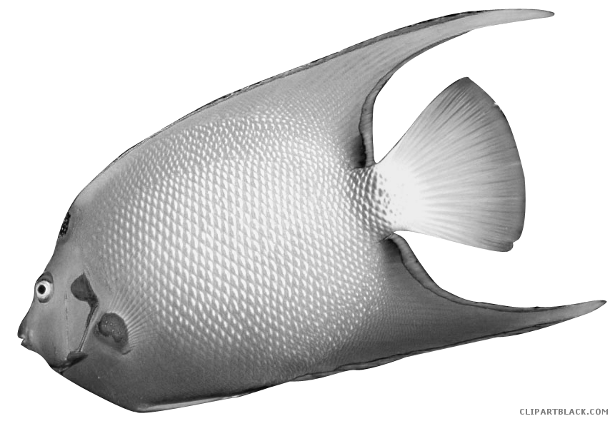 Clipart angel fish picture freeuse download Angel Fish Clipart - ClipartBlack.com picture freeuse download