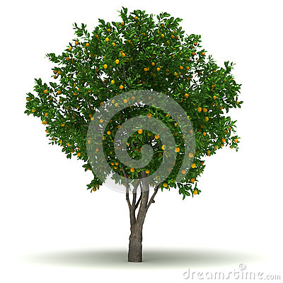 Clipart apfelbaum kostenlos clip black and white library Apple Tree Royalty Free Stock Image - Image: 16864746 clip black and white library