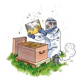 Clipart apiculteur picture library download Laurent, notre apiculteur !   L\'AMAP PAIMBLOTINE picture library download