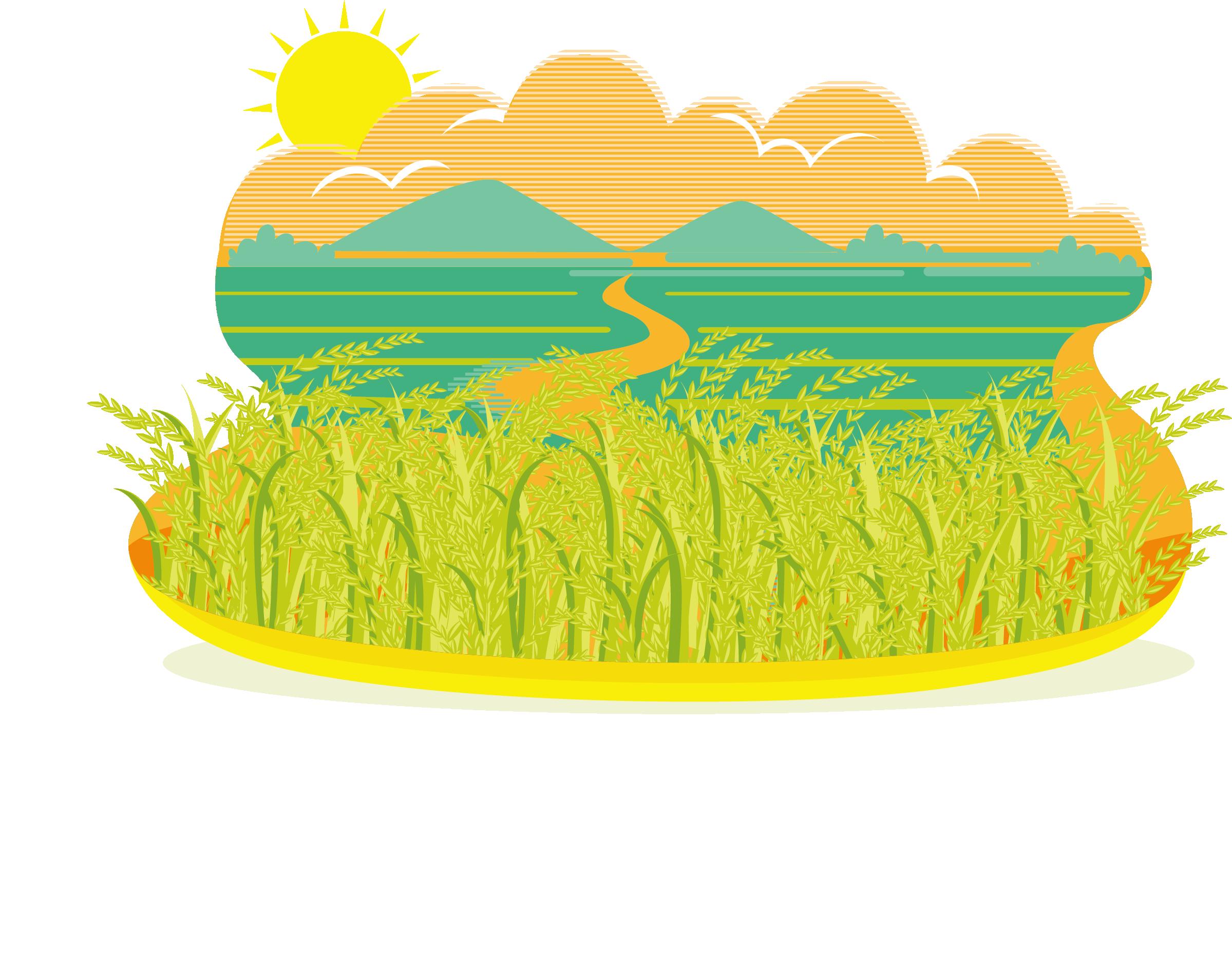 Clipart apple field jpg freeuse Paddy Field Rice Oryza sativa Clip art - Autumn rice fields ... jpg freeuse