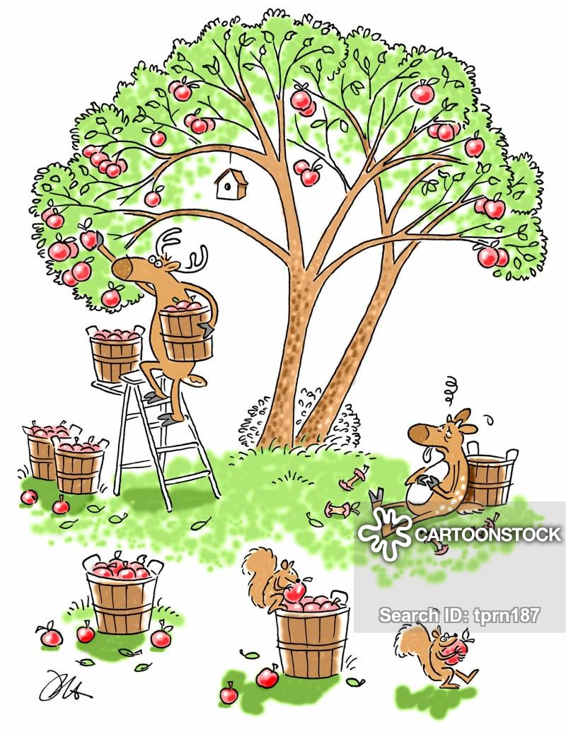 Clipart apple picker ladder svg library download Apple Picking Cartoons and Comics - funny pictures from CartoonStock svg library download