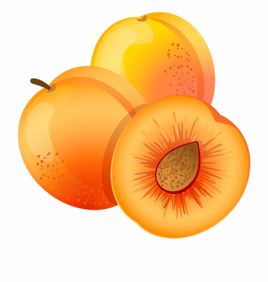 Clipart apricot image transparent library Apricot Png - Apricot Clipart Free PNG Images & Clipart Download ... image transparent library