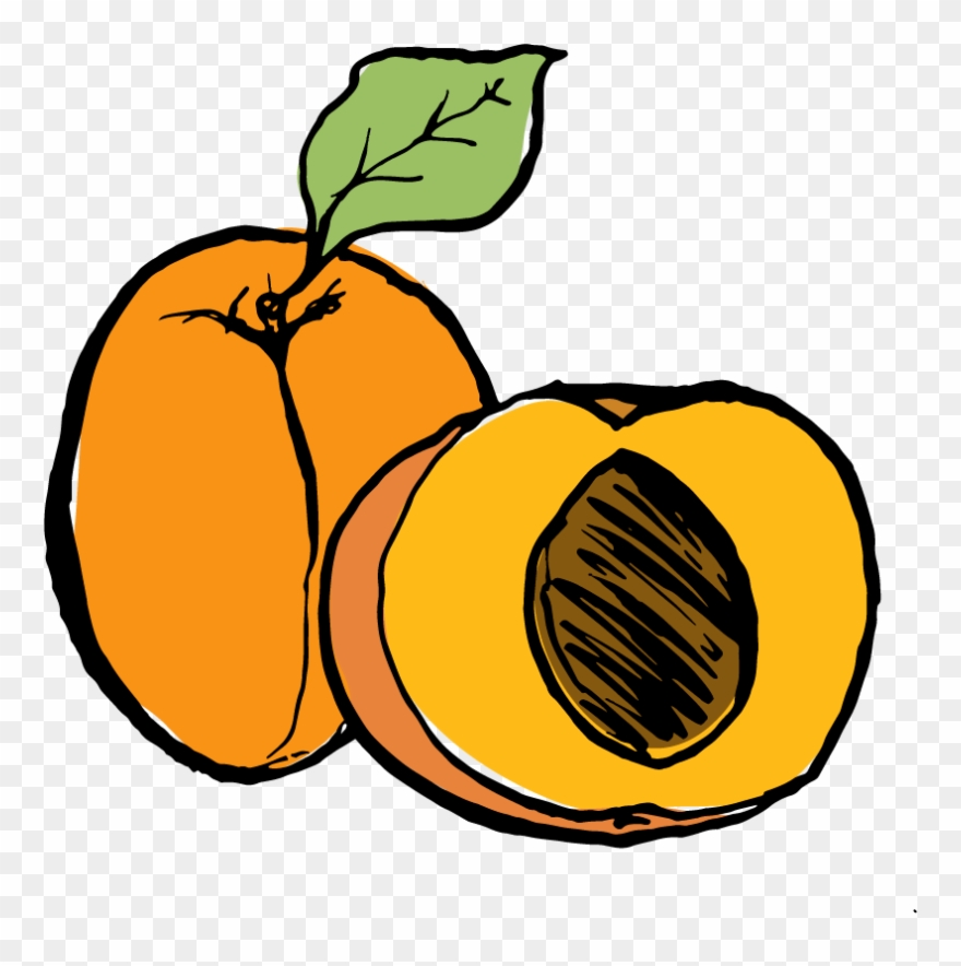 Clipart apricot clip art royalty free download Apricot Clipart (#752107) - PinClipart clip art royalty free download