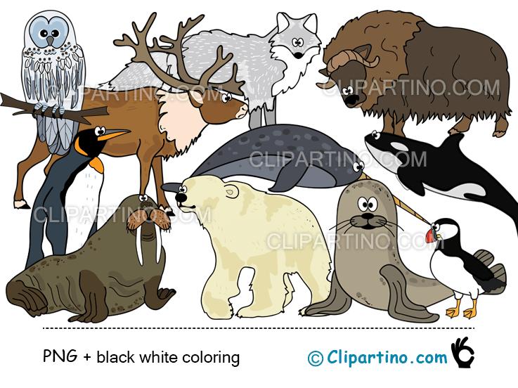 Clipart arcticsnowflakes jpg free download Arctic animals clipart Antarctic animals digital clip art jpg free download