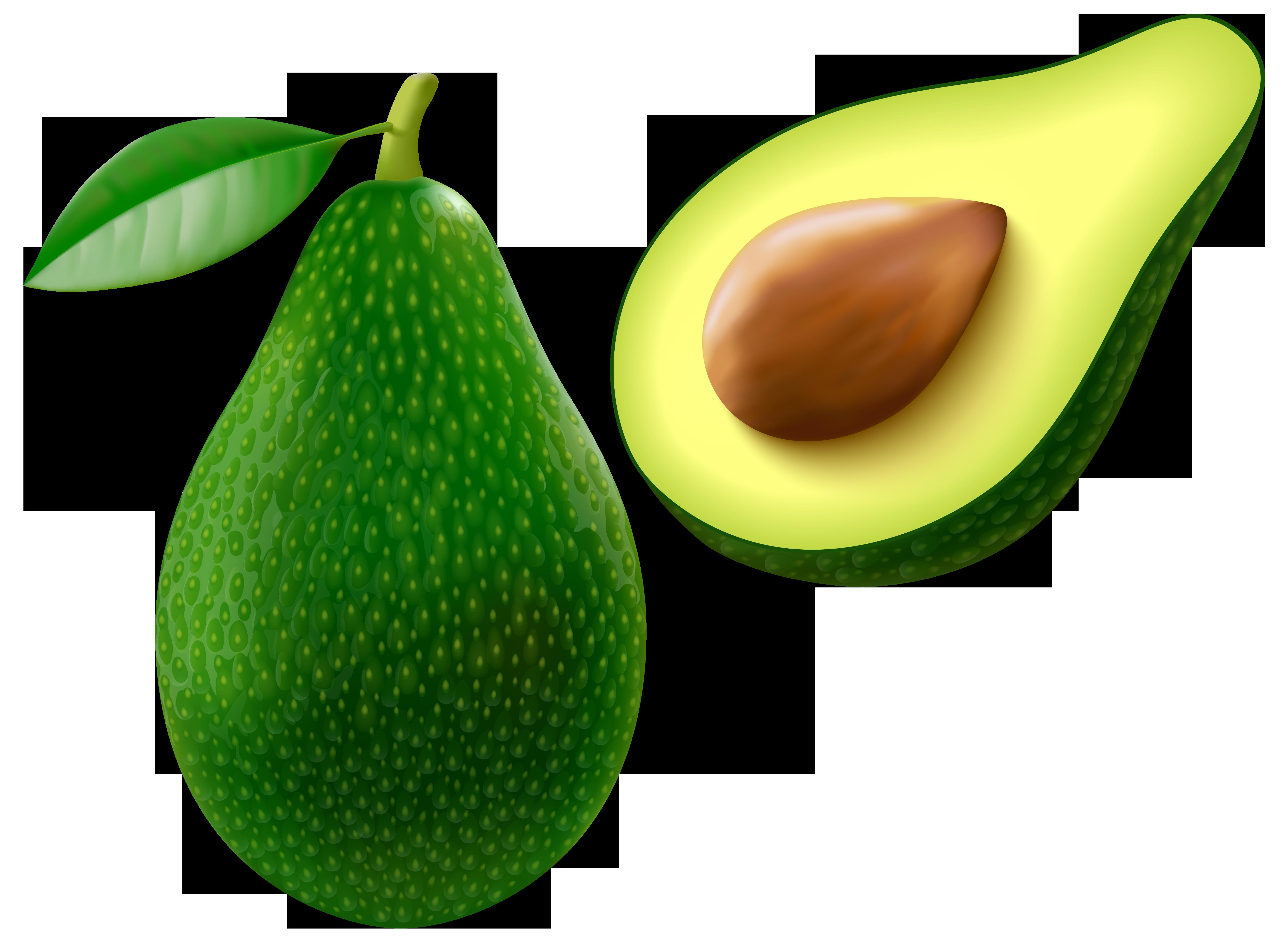 Free clipart images avacado. Avocado png vector image