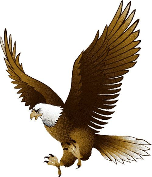 Clipart bald eagle picture free stock Flying Bald Eagle Clip Art - Bing Images | Eagles & Owls | Eagle ... picture free stock