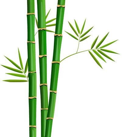 Clipart bamboo trees clip library download 440 Bamboo Shoots Cliparts Stock Vector And Royalty Free Authentic ... clip library download