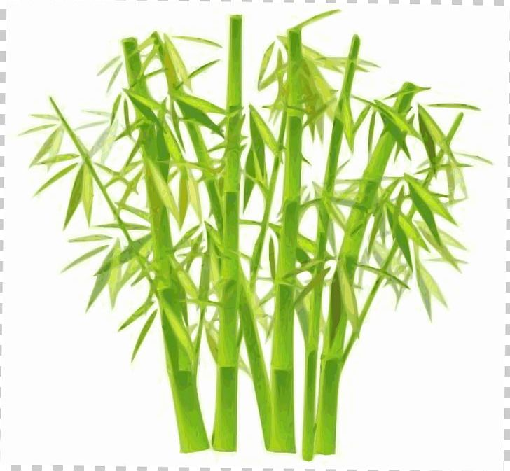Clipart bamboo trees clipart transparent stock Lucky Bamboo Plant PNG, Clipart, Areca Palm, Asian Bamboo ... clipart transparent stock