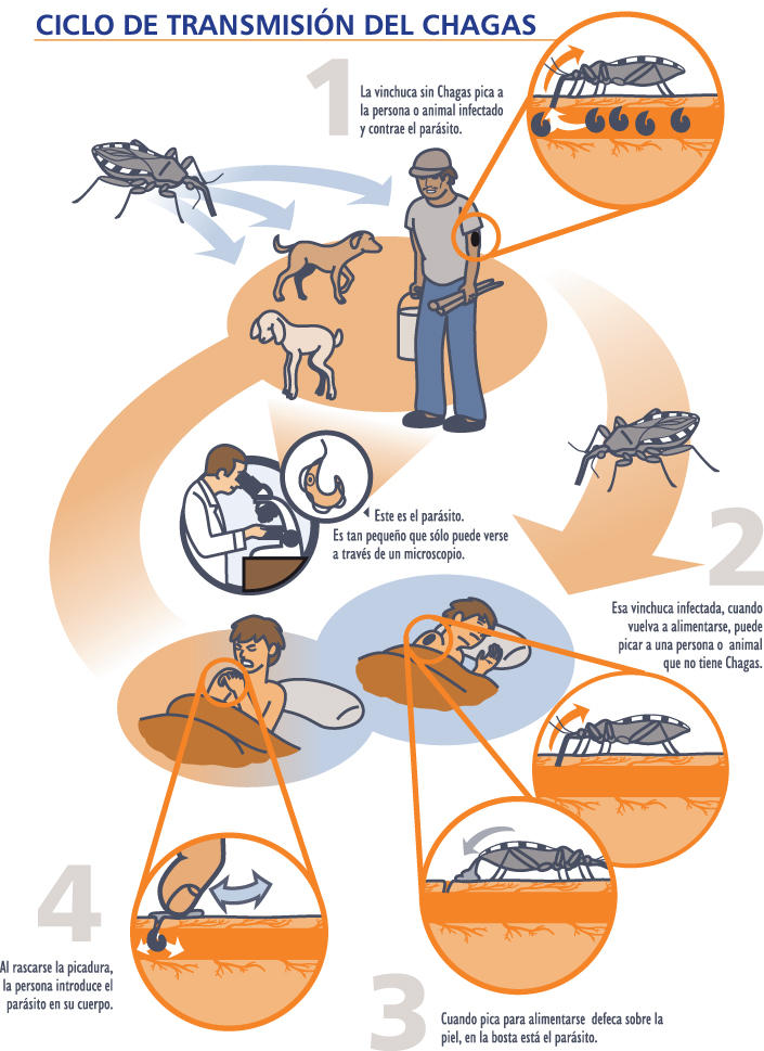 Clipart bank of texas. How chagas disease is