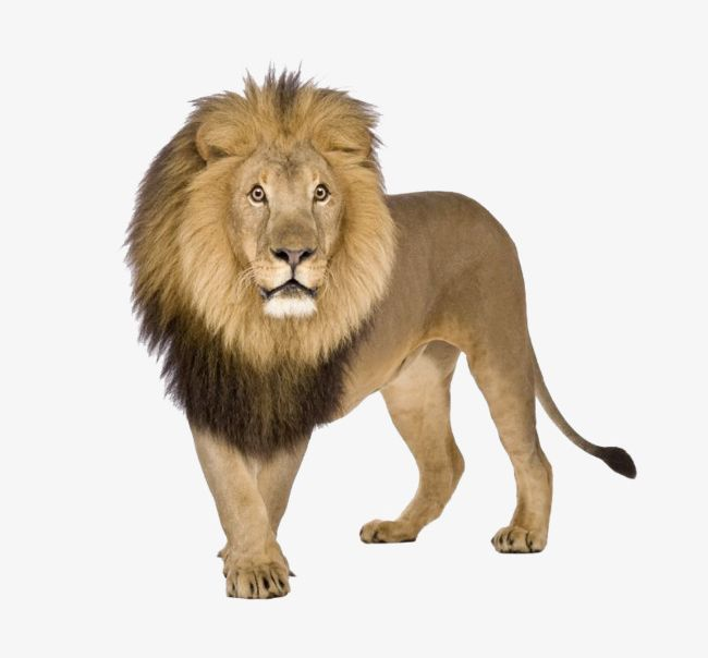 Clipart beastmaster picture transparent library Lions Beastmaster PNG, Clipart, Animals, Beastmaster Clipart ... picture transparent library