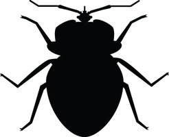 Clipart bed bugs clipart royalty free library Bedbug 20clipart | Clipart Panda - Free Clipart Images clipart royalty free library