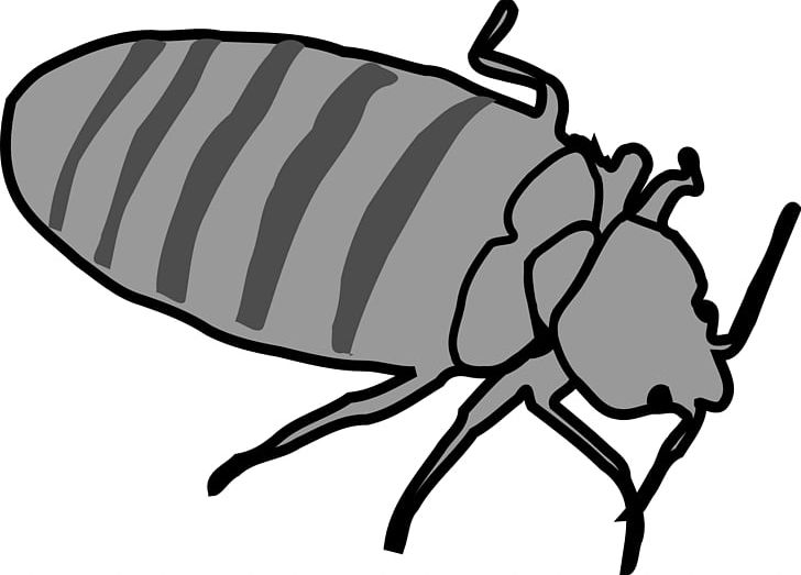Clipart bed bugs black and white download Bed Bug Bite PNG, Clipart, Bed, Bed Bug, Bed Bug Bite, Bed Bug ... black and white download