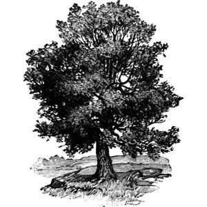 Clipart bergler free victorian tree clipart black and white - Google Search | Baby Books ... free