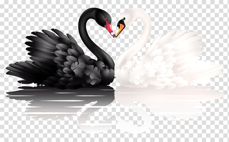 Clipart black and white animals forming hearts free library Black and white swan illustration, Mute swan White swan, black swan ... free library