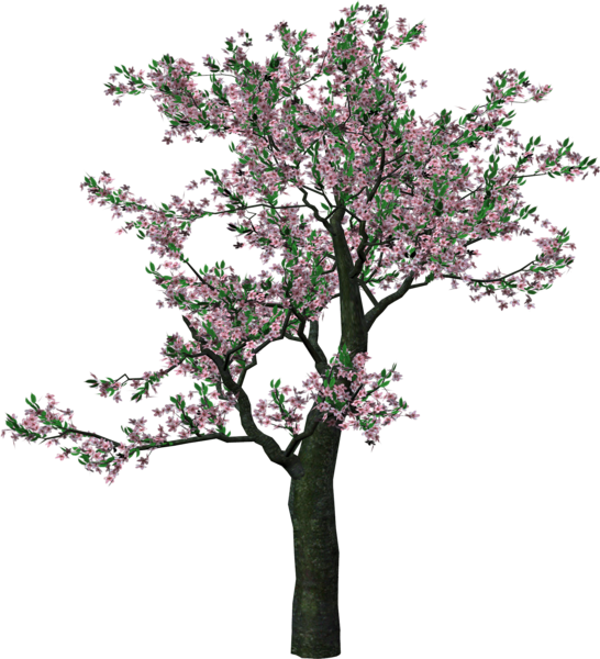 Large tree clipart freeuse library Large Spring Tree Clipart | Tree Art | Pinterest | Tree clipart and ... freeuse library
