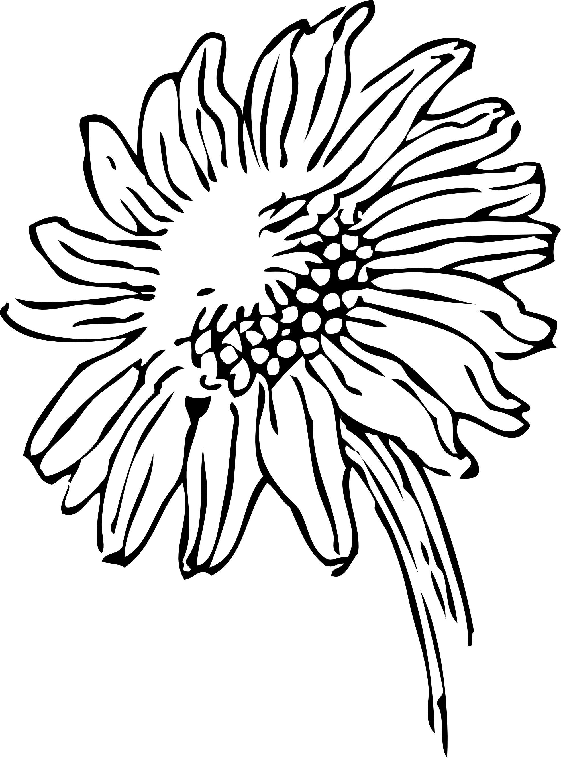 Black and white drawing. Flower clipart tumblr