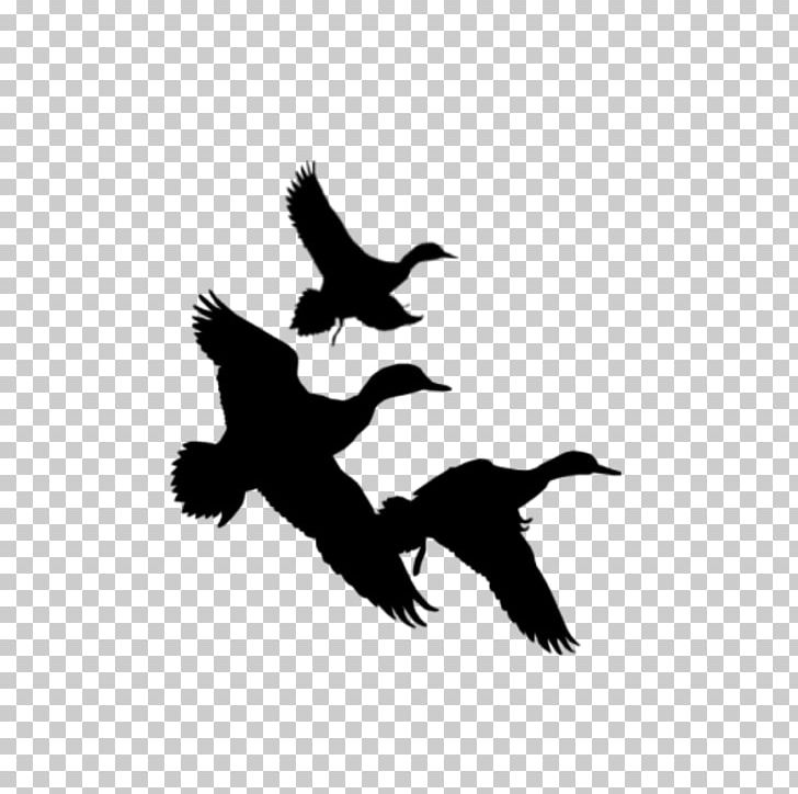 Free black and white clipart images duck hunting clip free stock Duck Waterfowl Hunting PNG, Clipart, Beak, Bird, Black And White ... clip free stock