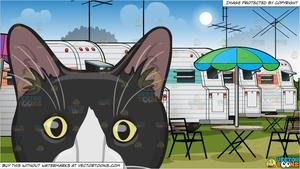 Clipart black and white trailer park freeuse stock The Face Of A Black And White Cat and A Trailer Park Background ... freeuse stock