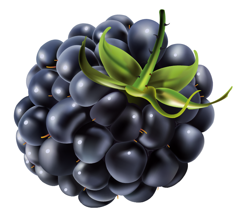 Clipart blackberries png library stock Free Free Blackberry Cliparts, Download Free Clip Art, Free Clip Art ... png library stock