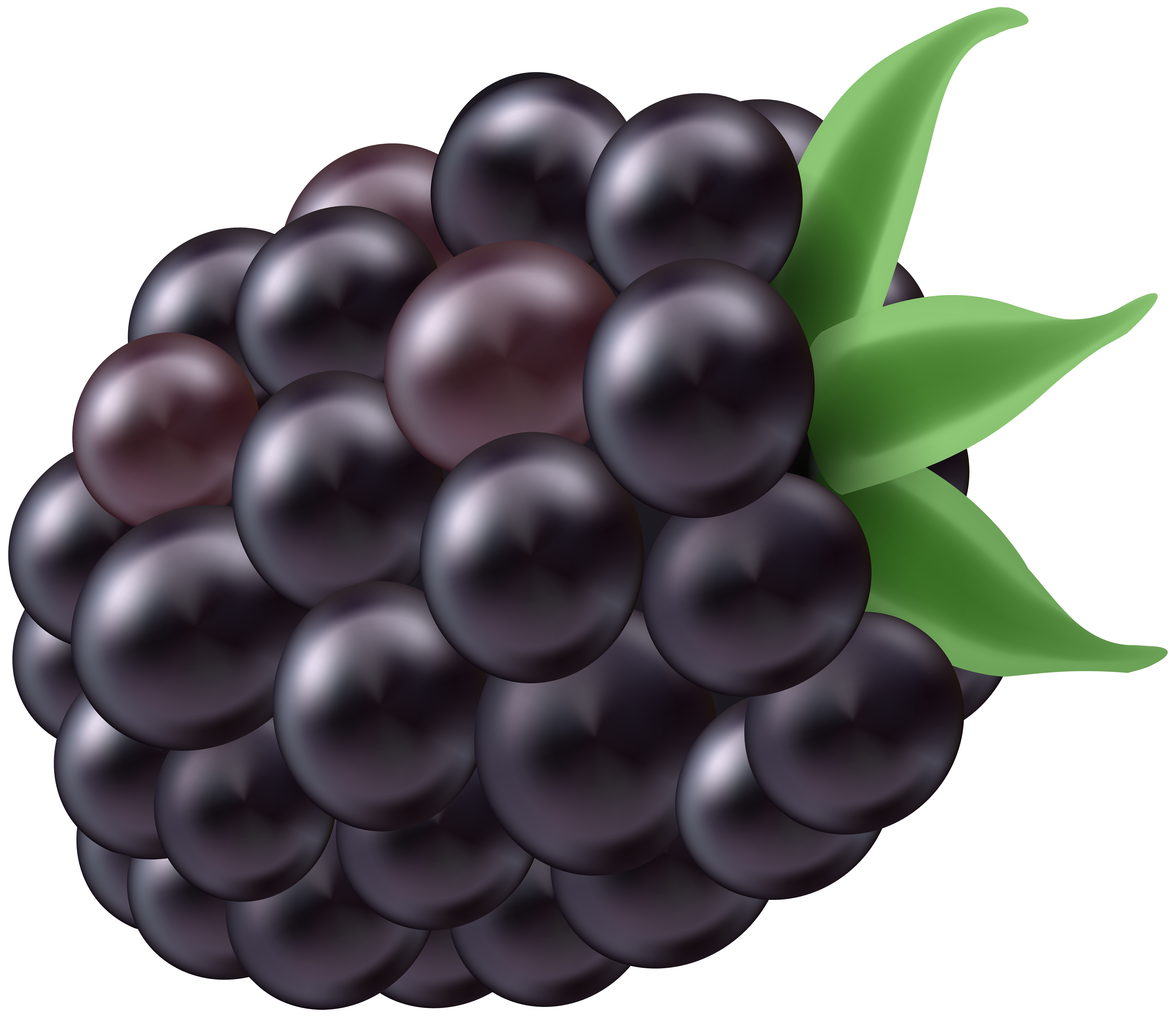 Free blackberry clipart