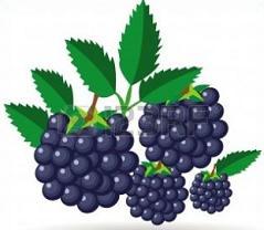 Clipart blackberries vector black and white stock Free Blackberries Clipart vector black and white stock