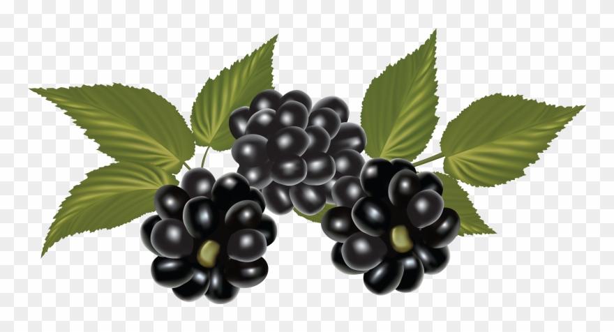 Clipart blackberries svg freeuse download Blackberry, Clip Art, Blackberries, Rich Brunette, - Blackberry Png ... svg freeuse download