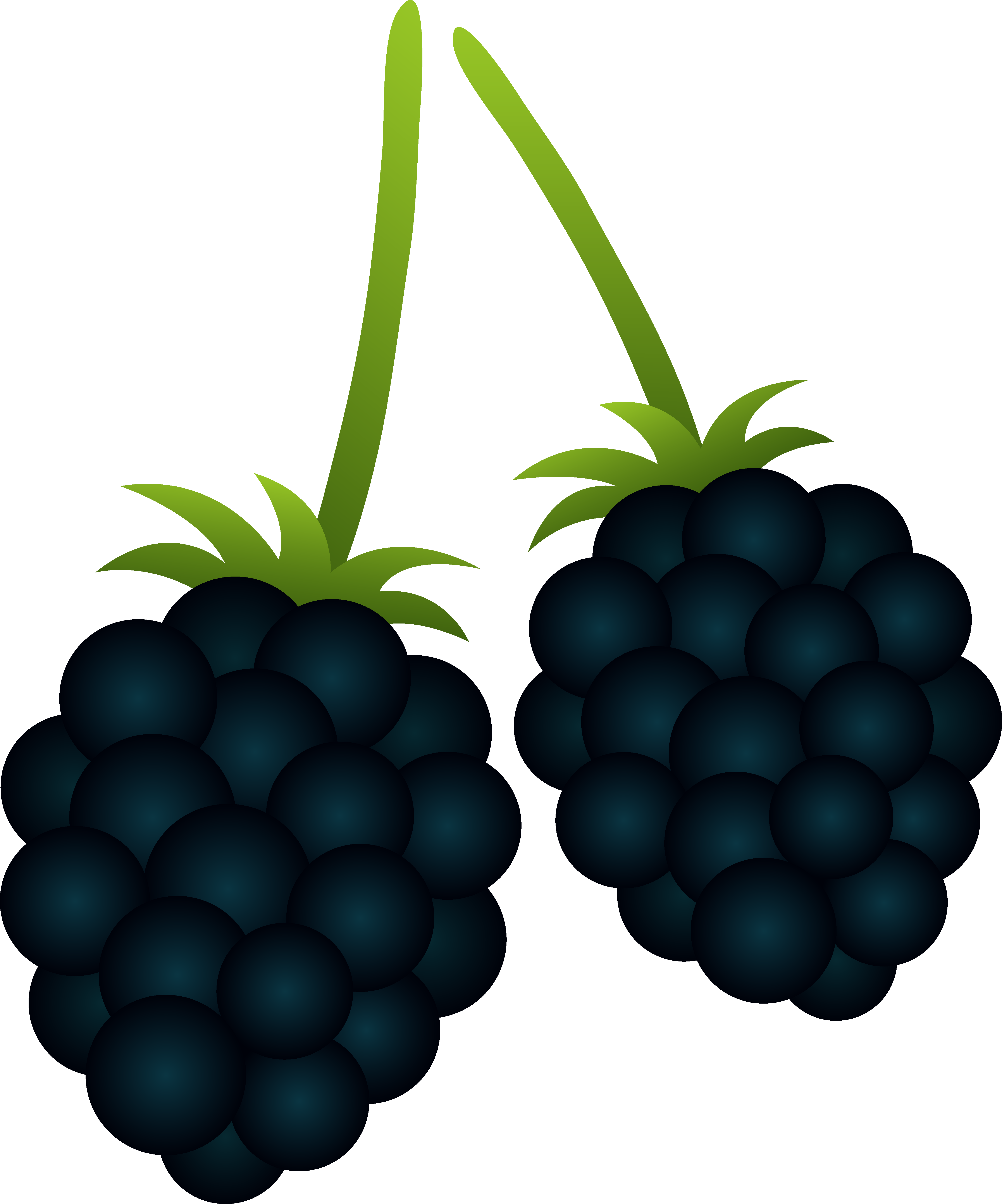 Clipart blackberries graphic library stock Two Blackberries - Free Clip Art graphic library stock