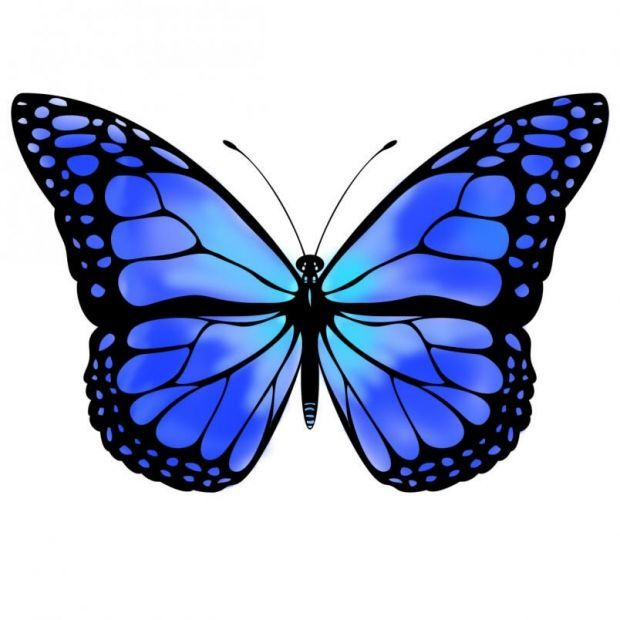 Clipart blue butterfly banner freeuse download Blue Monarch Butterfly | Blue butterfly by VicksterXP How bout a ... banner freeuse download