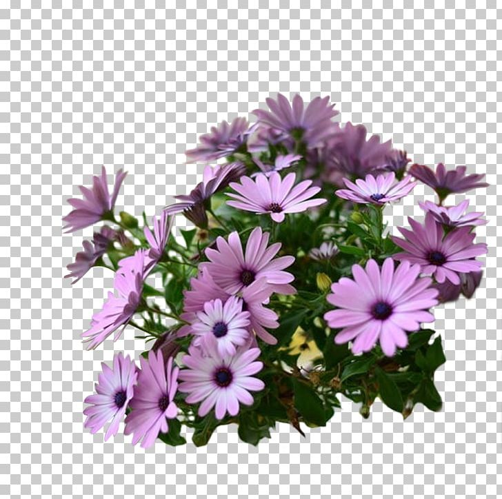 Clipart bluebunch jpg royalty free download Flower Garden Cut Flowers Common Daisy Floral Design PNG, Clipart ... jpg royalty free download