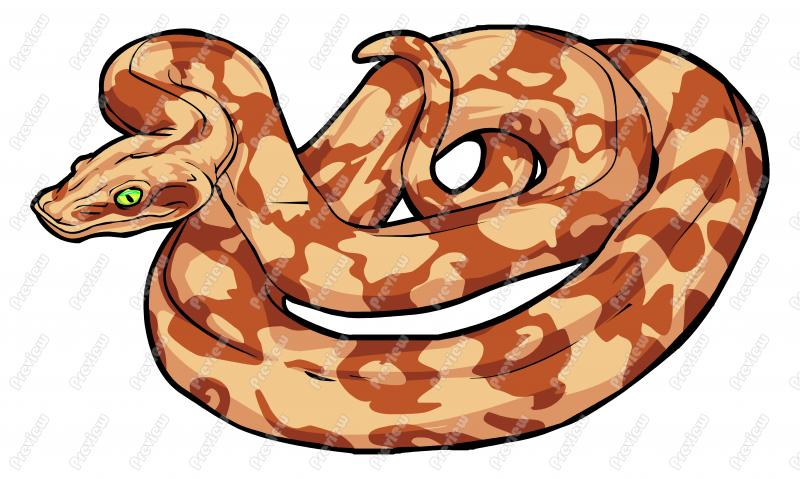 Clipart boa constrictor picture free library Boa Constrictor Snake Clipart | Clipart Panda - Free Clipart Images picture free library