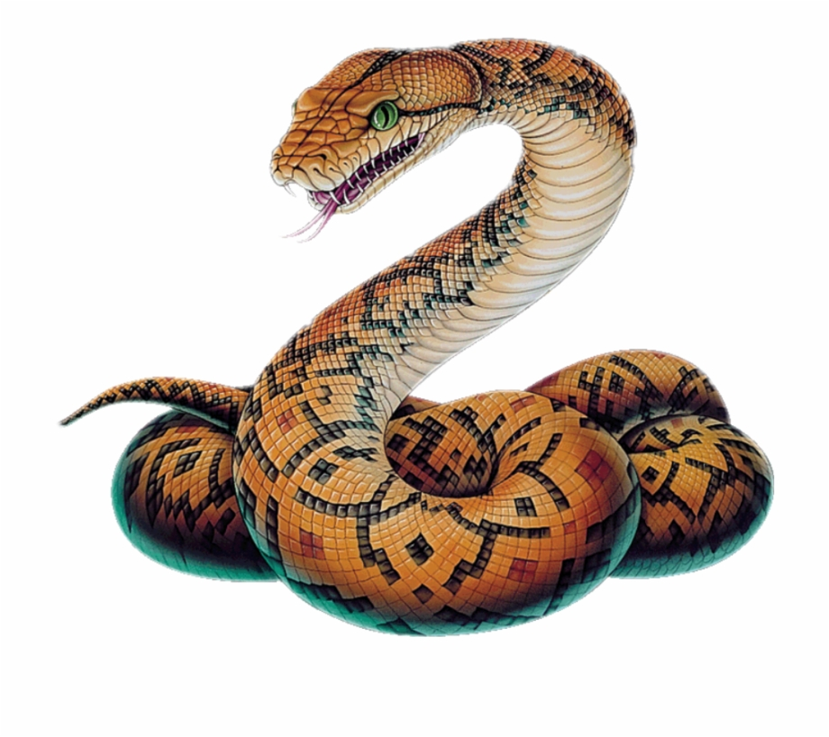 Clipart boa constrictor clipart library stock Snake Clipart Boa Constrictor , Png Download - Python Snake Drawing ... clipart library stock