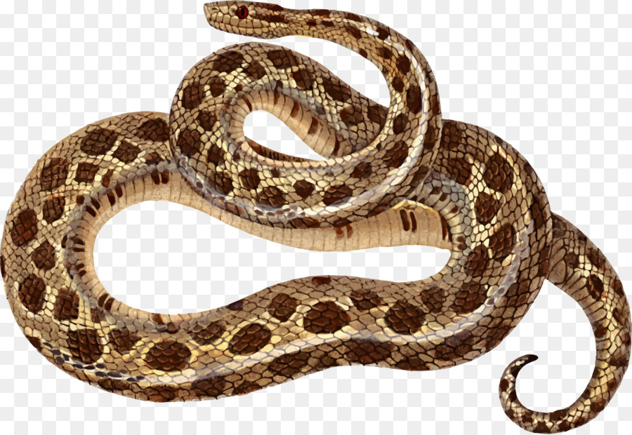 Clipart boa constrictor vector royalty free stock Snake Cartoon clipart - Snakes, Illustration, Snake, transparent ... vector royalty free stock