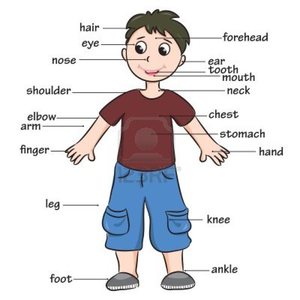 Free clipart body parts clipart free library Preschool Clipart Body Parts | Free Images at Clker.com - vector ... clipart free library