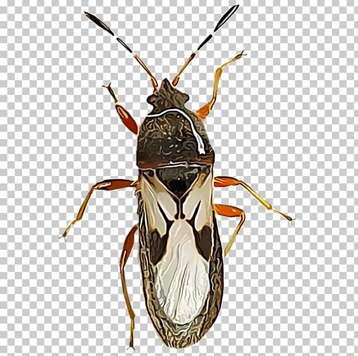 Clipart boxelders jpg black and white library Fly Ant True Bugs Bedbug Pest PNG, Clipart, Ant, Arthropod, Bedbug ... jpg black and white library
