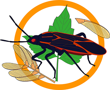 Clipart boxelders clipart freeuse download Boxelder Survey   Bugs In Our Backyard clipart freeuse download