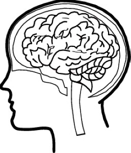 Free clipart of the brain. Cliparts download clip art