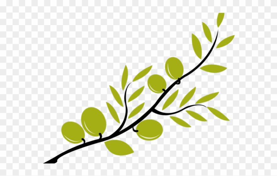 Olive branches clipart