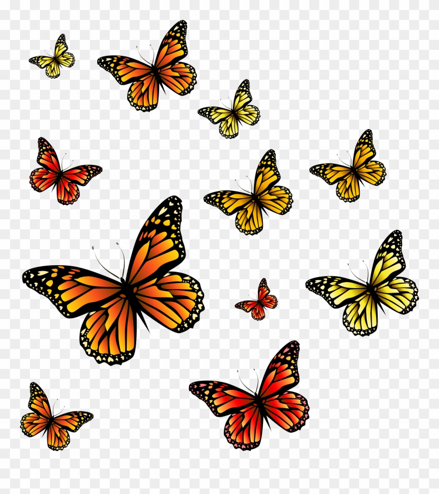 Clipart burgandy butterfly transparent jpg black and white download Clipart Butterfly Burgundy - Butterflies Png Transparent Png ... jpg black and white download