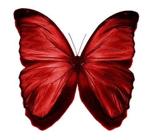 Clipart burgandy butterfly transparent vector royalty free Butterflies clipart burgundy, Butterflies burgundy Transparent FREE ... vector royalty free