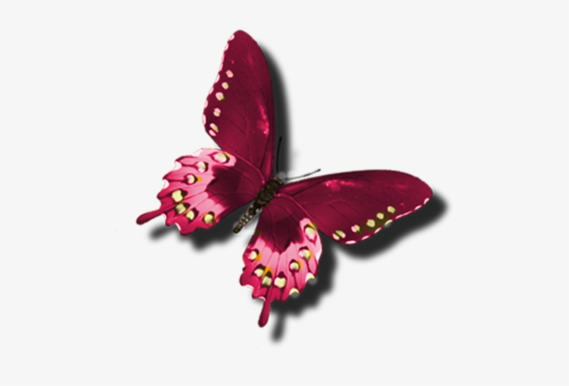 Clipart burgandy butterfly transparent picture black and white stock Butterfly Clip Art, Red Butterfly, Beautiful Butterflies ... picture black and white stock