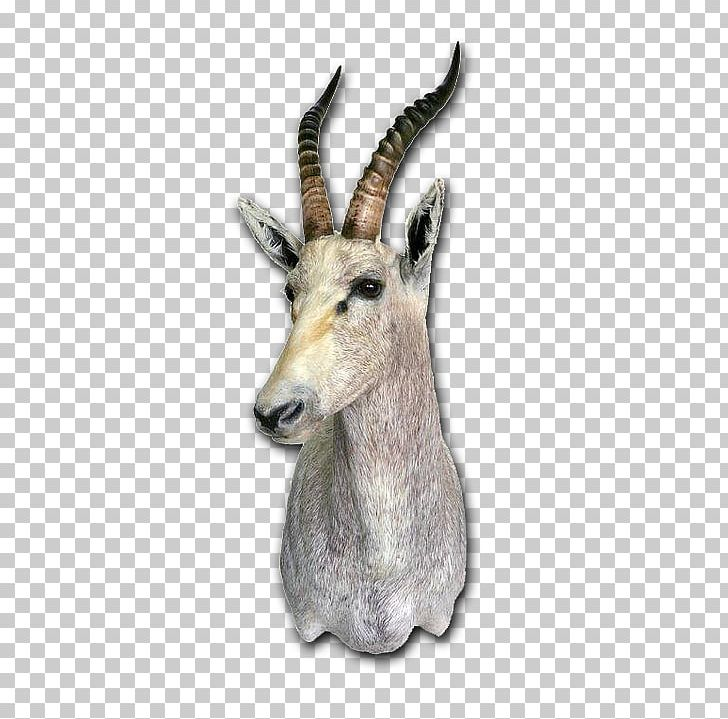 Clipart bushbuck graphic free library Springbok Taxidermy Skull Mounts Tanning Deer PNG, Clipart, Antelo ... graphic free library