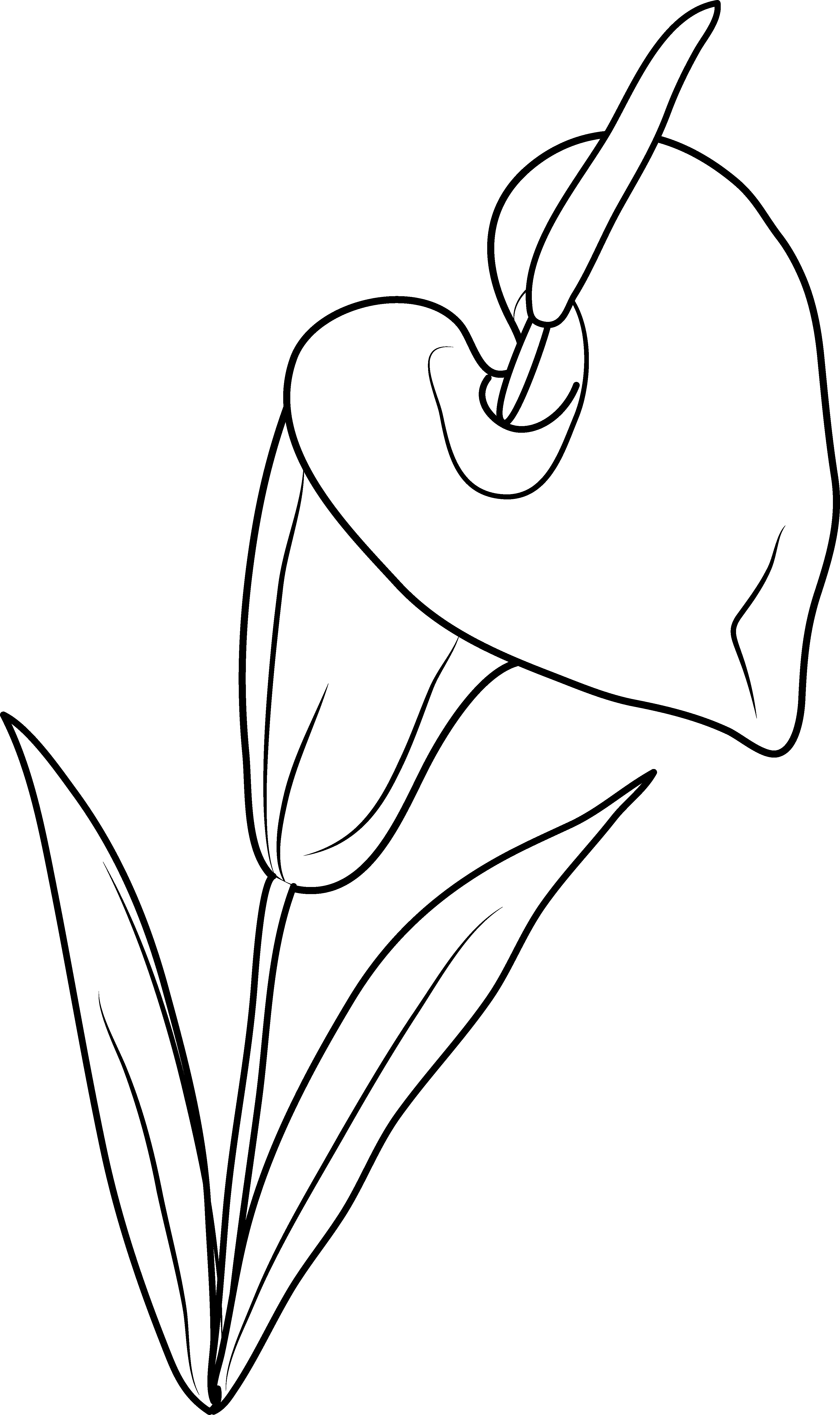 Clipart calla lily flower vector freeuse download Lily Flower Coloring Page - Free Clip Art vector freeuse download