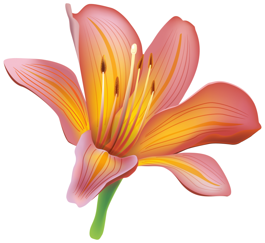Clipart calla lily flower clipart library stock lily flower png - Free PNG Images | TOPpng clipart library stock