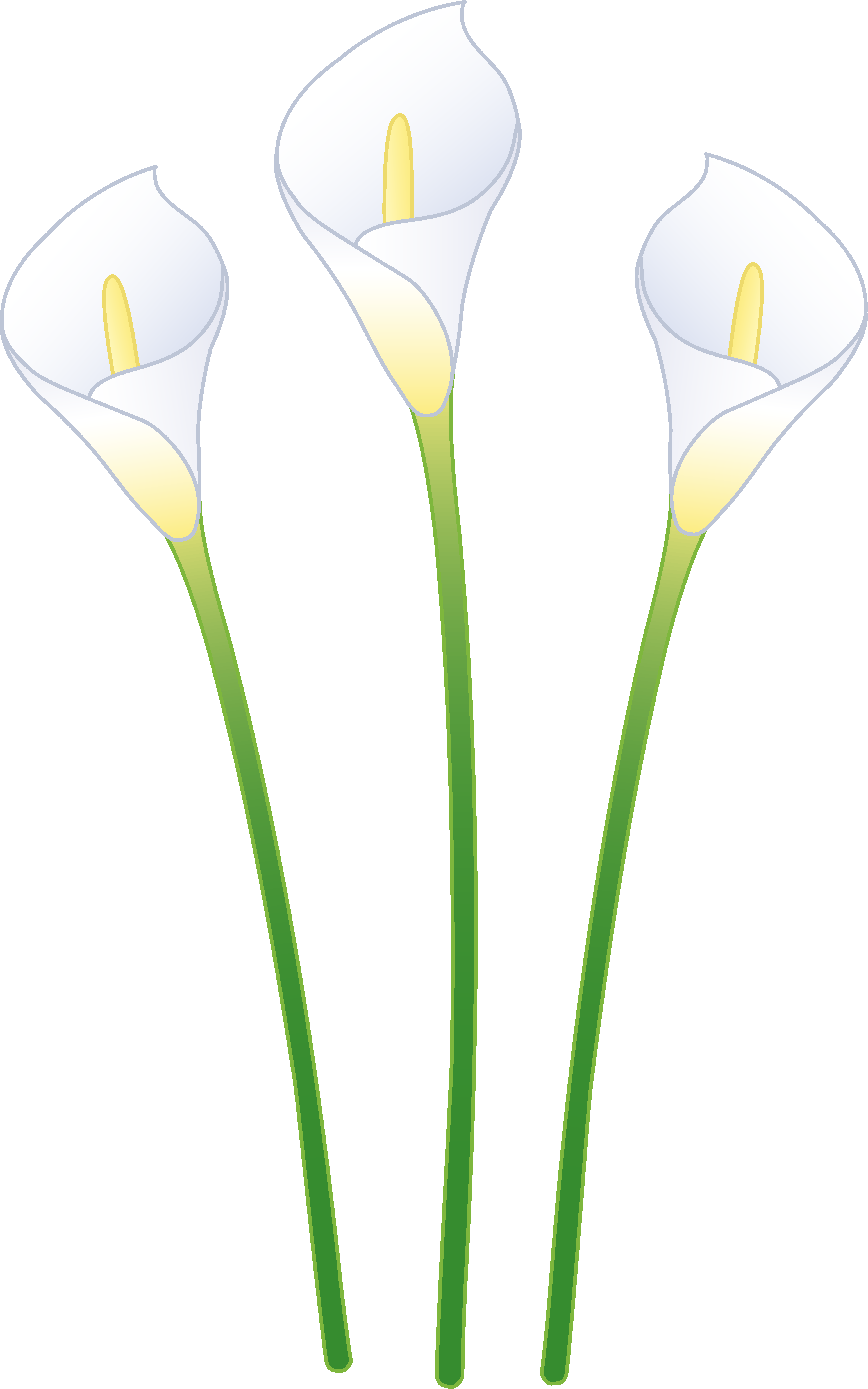 Clipart calla lily flower vector library download Three White Calla Lilies - Free Clip Art vector library download