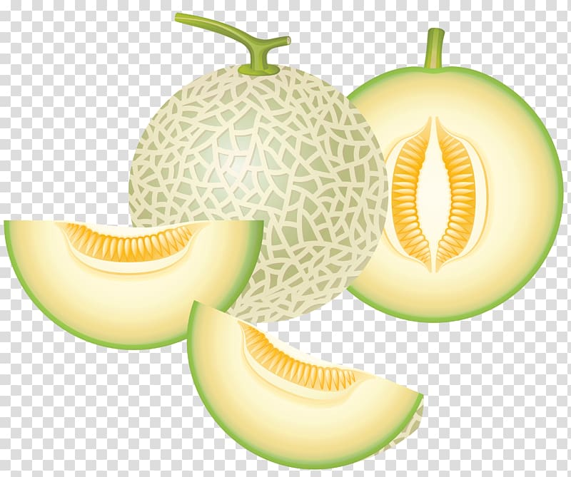 Clipart cantaloupe transparent download Green melon , Honeydew Cantaloupe Melon , Cantaloupe Melon ... transparent download